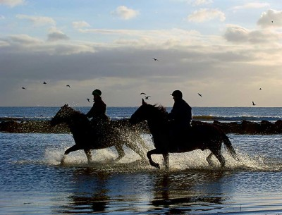 Horses training on beach - James Purcell - Vote 1 Local Jobs